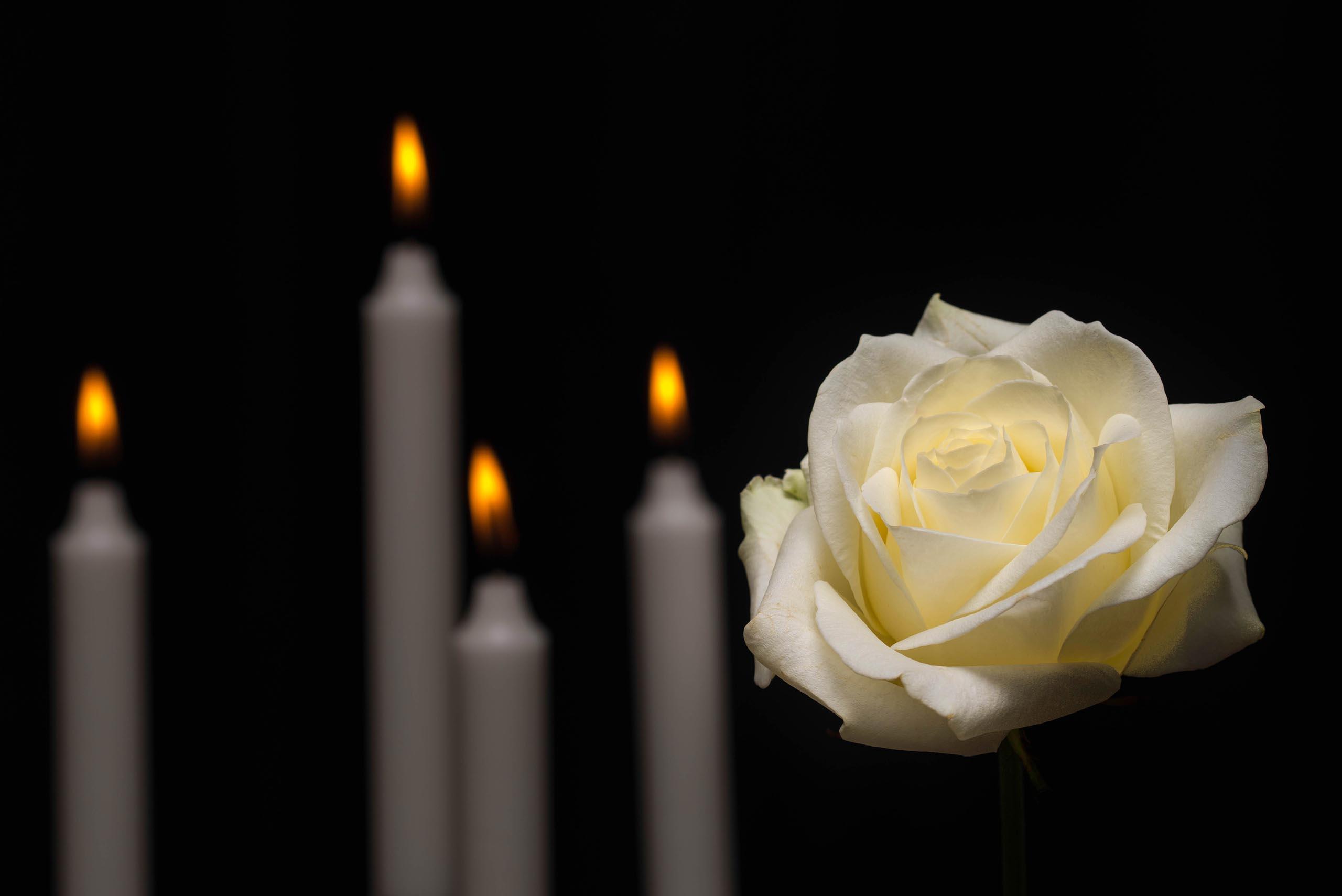 stock memorial candles white rose.'