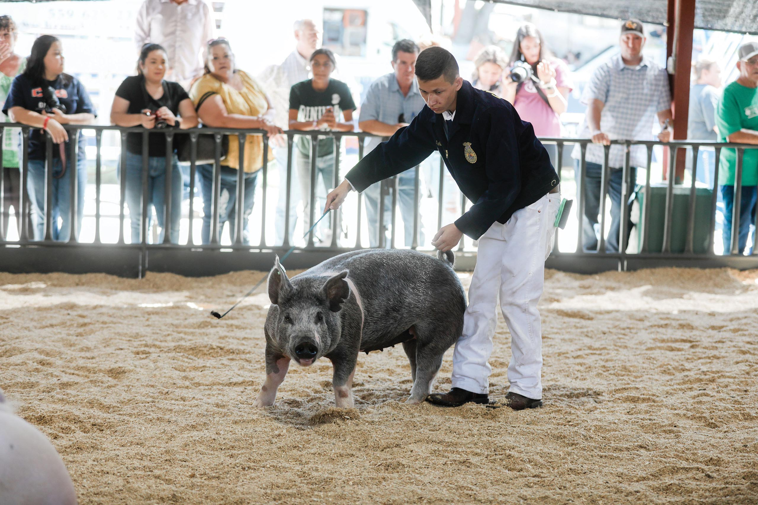 sub-front-tulare-county-fair_pig-exhibit