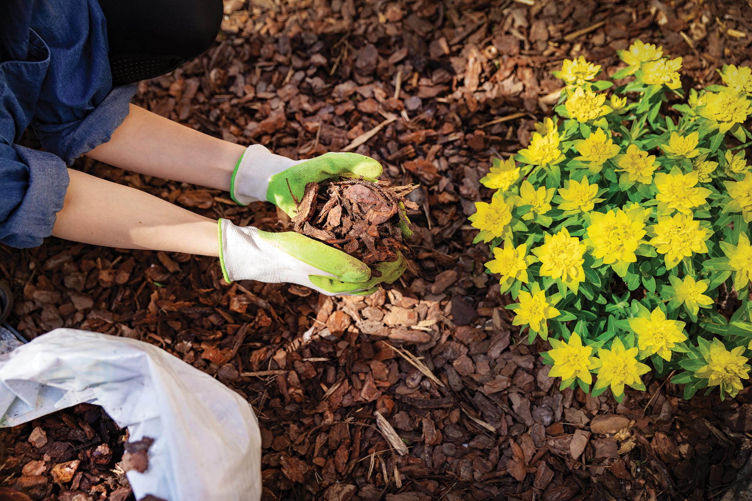 gardener mulching flower bed with pine tree bark mulch